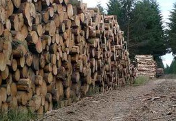 Timber Law